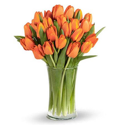 Orange Tulip Collection: Tulip Flowers