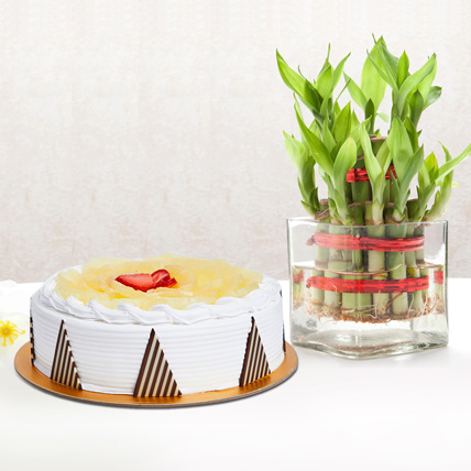 Pineapple Cake and Lucky Bamboo Combo: Gifts For Teacher's Day