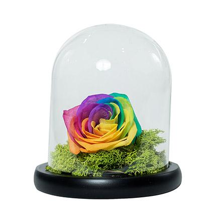Splendid Rainbow Rose: