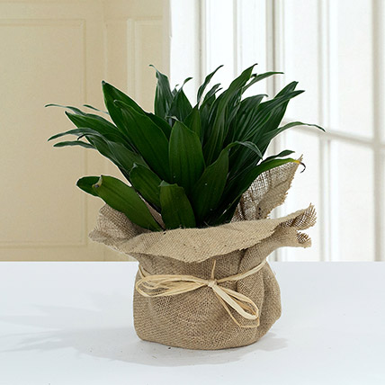 Green Elegance in Jute Wrapping Pot: Shrubs