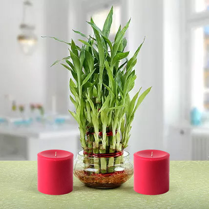 Three Layer Lucky Bamboo Plant N Candles: