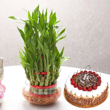 3 Layer Bamboo With Black Forest Cake:  Business Gifts