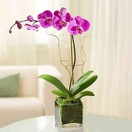 Purple Orchid Plant In Glass Vase: Flowering Plants