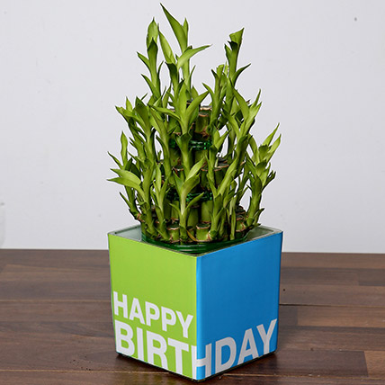 3 Layer Bamboo Plant For Birthday: Indoor Plants in Dubai