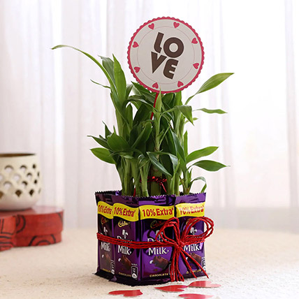 Lucky Bamboo With Love Tag Dairy Milk Combo: Karwa Chauth Gift to Wife