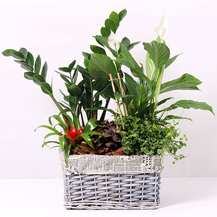 Beautiful Green Garden Basket: