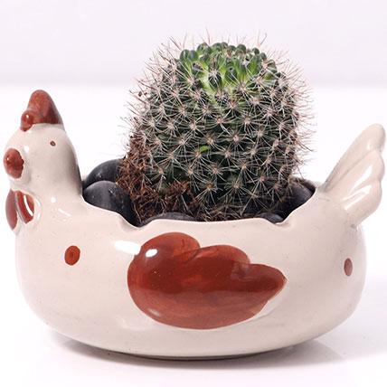 Cactus In Chicken Design Pot: Desktop Plants