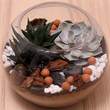 Decorative Succulents In Fish Bowl: Air Purifying Indoor Plants