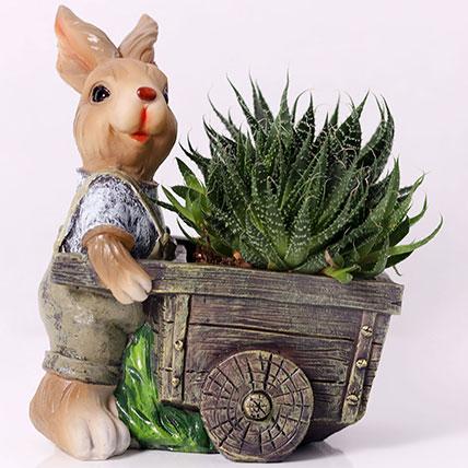 Elegant Aloe Aristata in Rabbit Cart Pot:
