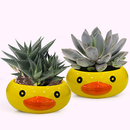 Frog Face Pots with Plants: