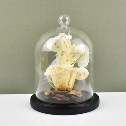 Peach Forever Rose In Glass Dome: Flower Delivery