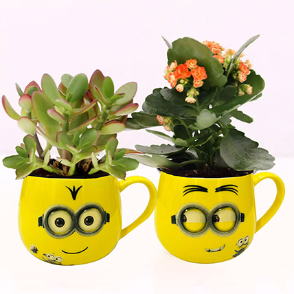 Crassula and Kalanchoe Plants in Emoticon Mugs: Succulent Plants