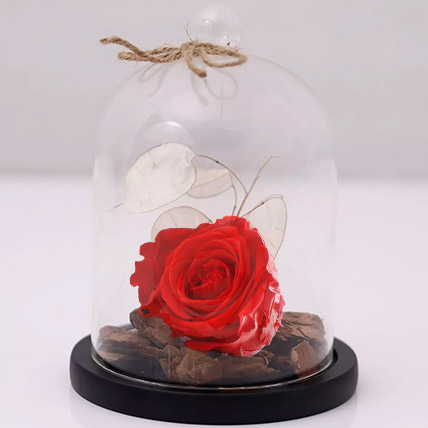 Red Forever Rose In Glass Dome:  Anniversary Flowers