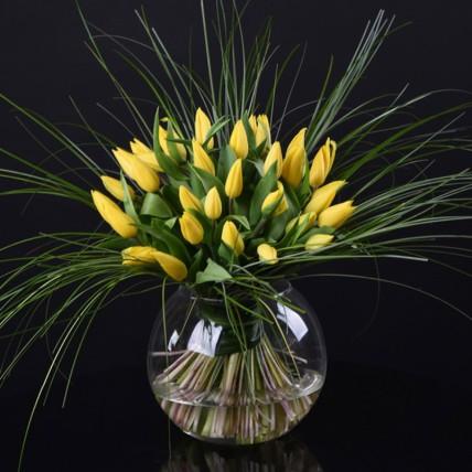 Vivid Tulip Delight: Tulip Flowers