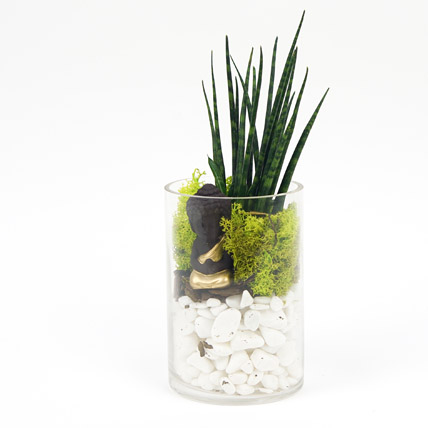 Prosperity to You: New Arrival Plants