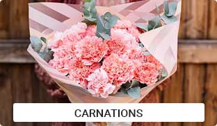 Carnations Flowers Online