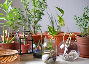 7 Best Household Plants According To Vastu