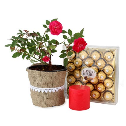 Rose plant with Rocher